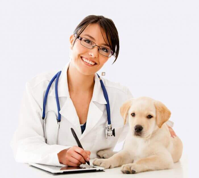doctor with puppy