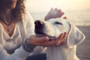Emotional Support Dog 2
