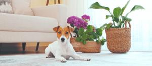 dog with safe houseplants