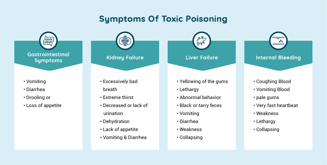 Symptoms of Toxic Poisoning in Pets