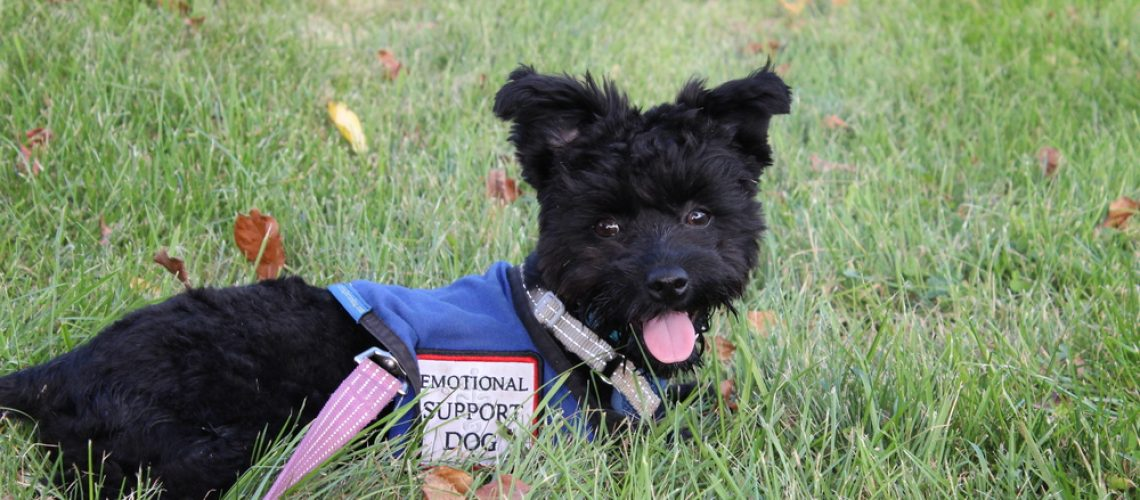 what is an emtional support animal